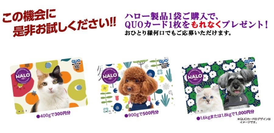 ハローQUOカードプレゼントキャンペーン
